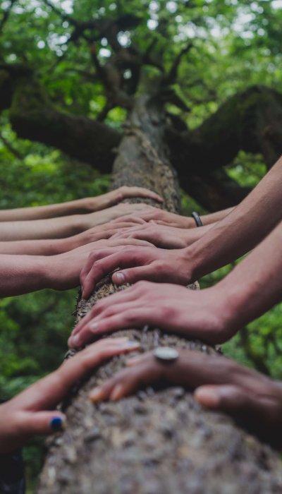 Software Entwicklung Hände des Teams zusammen auf Baumstamm